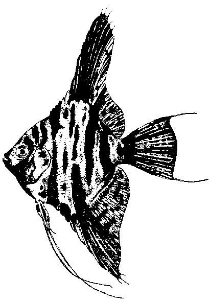 zag_x_2